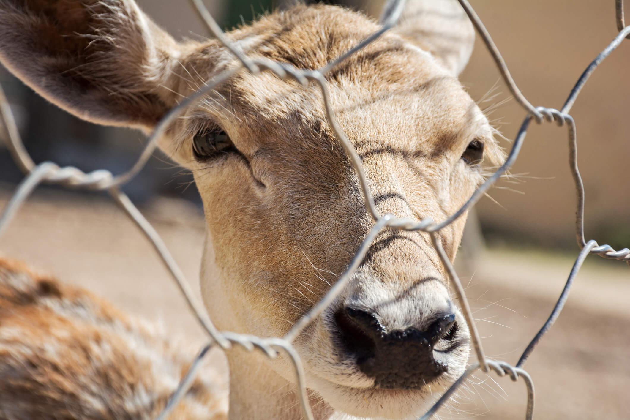 Deer Fencing Pittsburgh
