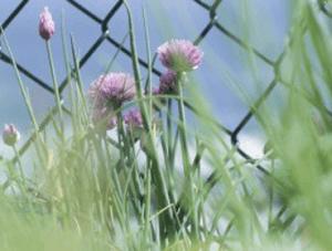 Spring Fence Maintenance