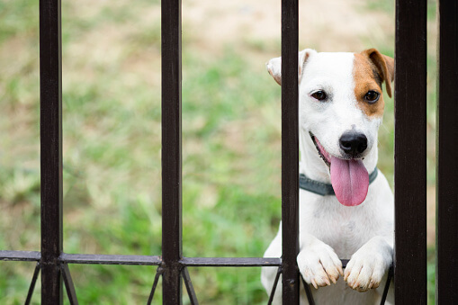 Dog Fencing Pittsburgh